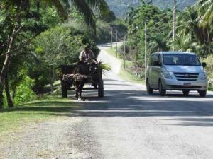 ox driven cart